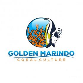 Golden Marindo Logo
